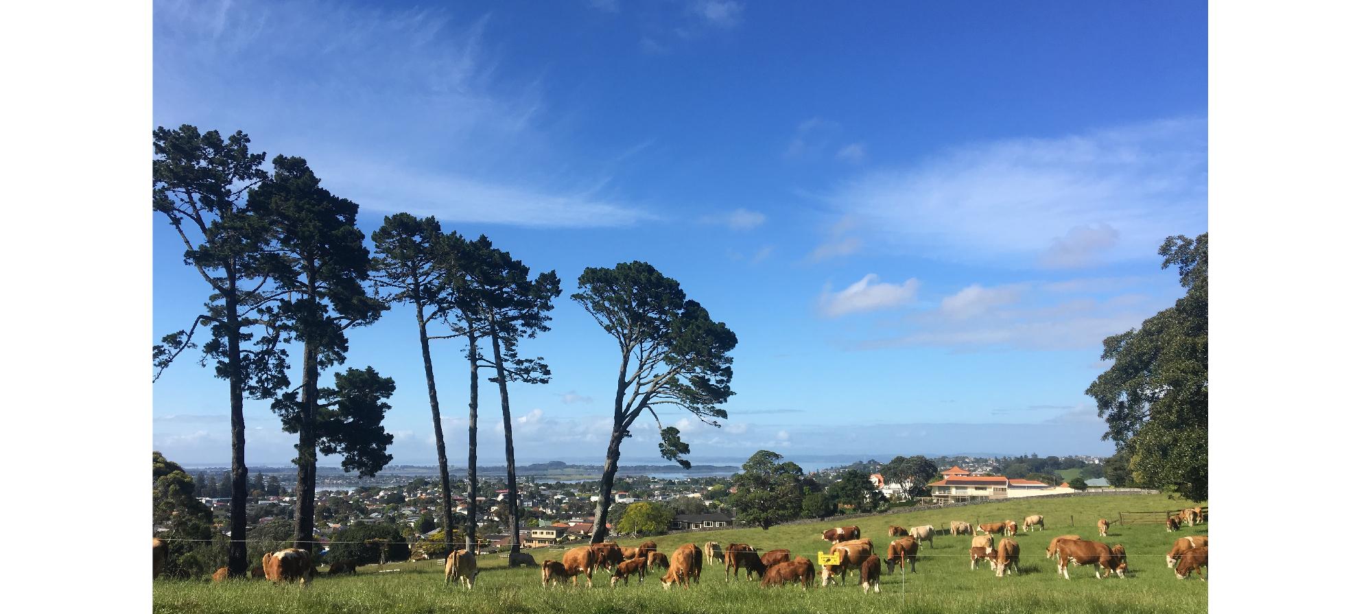 迷失南半球:美景太多,時間太少 — 紐西蘭